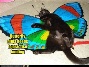 Butterfly ninja needs to practice landing