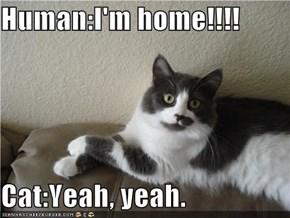 Human:I'm home!!!!  Cat:Yeah, yeah.