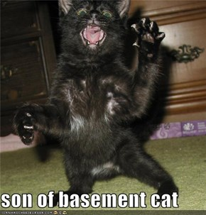 son of basement cat