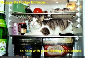 Moggie Da Fridge Enforcer...  to help with your dieting resolutions.