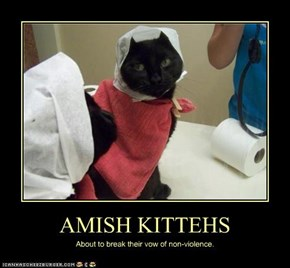 AMISH KITTEHS