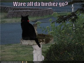 Ware all da birdiez go?