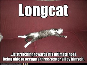 Longcat is stretching hard for his dream