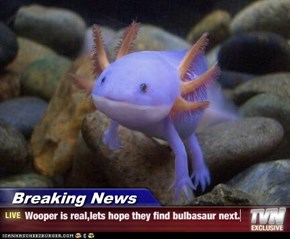 Breaking News - Wooper is real,lets hope they find bulbasaur next.