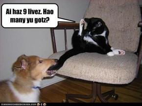 Ai haz 9 livez. Hao many yu gotz?