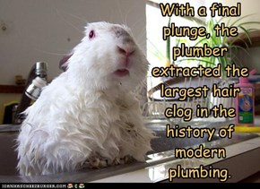 With a final plunge, the plumber extracted the largest hair clog in the history of modern plumbing.