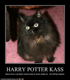 HARRY POTTER KASS