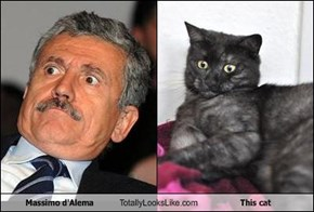Massimo d'Alema Totally Looks Like This cat