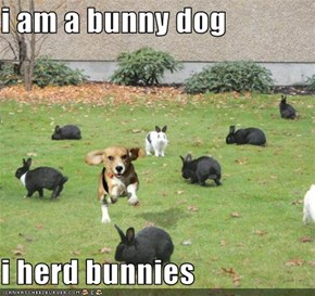 i am a bunny dog  i herd bunnies