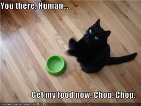 You there, Human...  Get my food now. Chop, Chop.