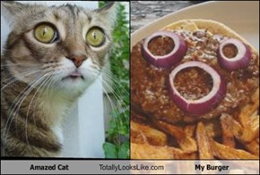 Amazed Cat  Totally Looks Like My Burger