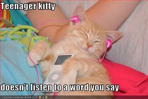 Teenager kitty  doesn't listen to a word you say