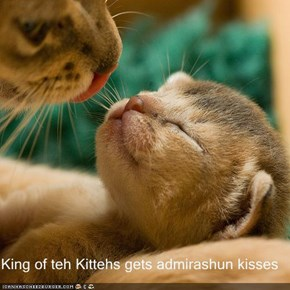 King of teh Kittehs gets admirashun kisses