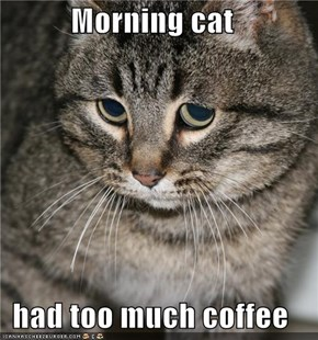 Morning cat  had too much coffee
