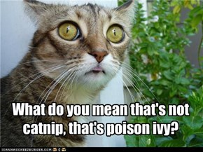 What do you mean that's not  catnip, that's poison ivy?