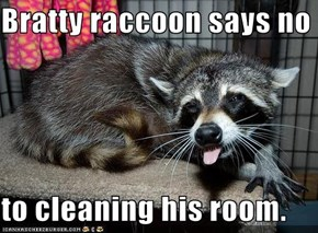 Bratty raccoon says no  to cleaning his room.