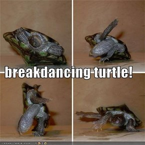 breakdancing turtle!