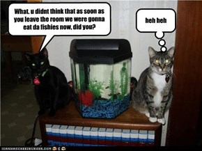 What. u didnt think that as soon as you leave the room we were gonna eat da fishies now, did you?