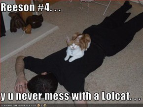 Reeson #4. . .  y u never mess with a Lolcat. . .