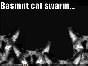 Basmnt cat swarm...