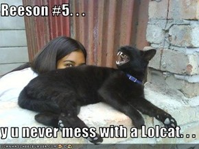 Reeson #5. . .  y u never mess with a Lolcat. . .