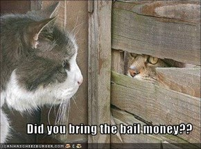 Did you bring the bail money??