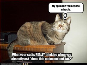 "What your cat is REALLY thinking when you  absently ask ""does this make me look fat?"""