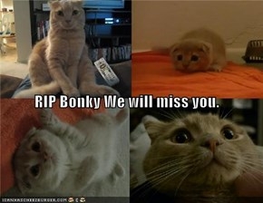 RIP Bonky We will miss you.
