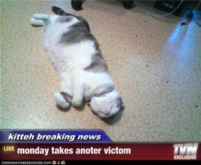 kitteh breaking news - monday takes anoter victom