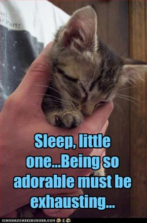Sleep, little one...Being so adorable must be exhausting...