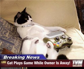 Breaking News - Cat Plays Game While Owner Is Away!