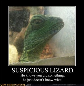 That Lizard Is on to Me