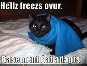 Hellz freezs ovur.  Basement Cat adapts.