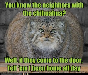 You know the neighbors with the chihuahua?