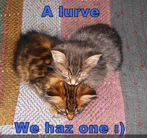 A lurve  We haz one :)