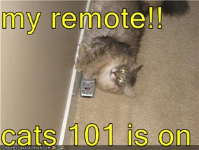my remote!!  cats 101 is on