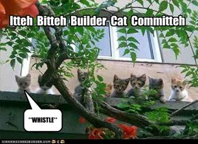 Itteh  Bitteh  Builder  Cat  Committeh