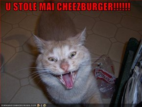 U STOLE MAI CHEEZBURGER!!!!!!