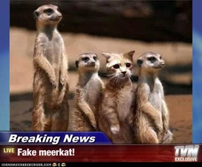Breaking News - Fake meerkat!