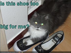 Is this shoe too big for me?