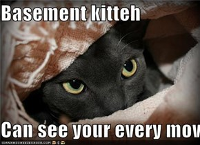 Basement kitteh  Can see your every mov