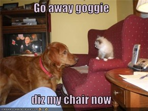 Go away goggie  diz my chair now