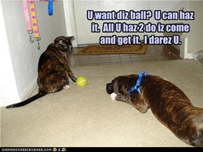 U want diz ball?  U can haz it.  All U haz 2 do iz come and get it.  I darez U.