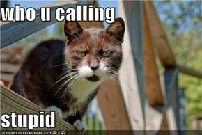 who u calling  stupid
