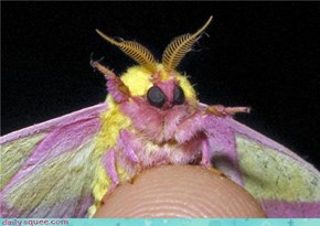 Moth, You Look Ready For a Pride Parade!