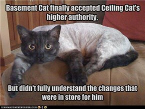 Basement Cat finally accepted Ceiling Cat's higher authority,