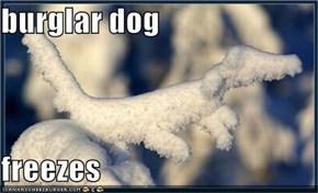 burglar dog  freezes