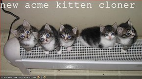 new acme kitten cloner