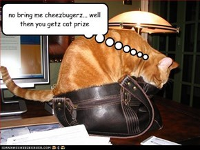 no bring me cheezbugerz... well then you getz cat prize