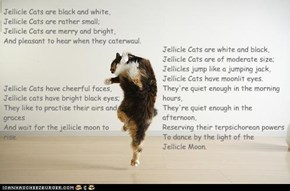 Not really a Jellicle, but still...